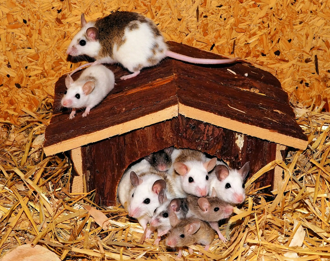 mouse-family-443297_1280